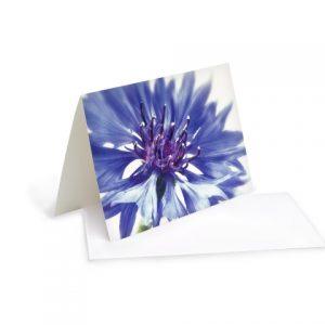 Grußkarte Blaue Kornblumen