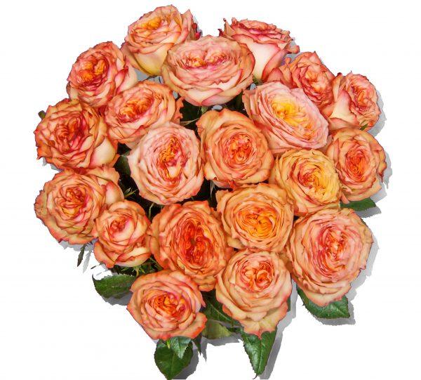 Rosen gelb orange