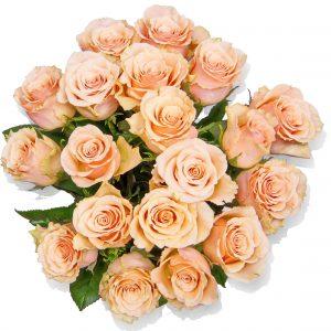 Rosen lachs
