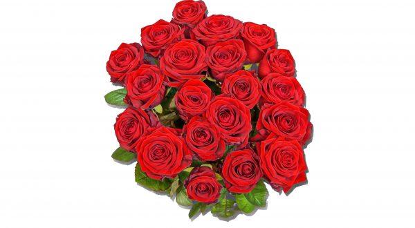 strauß rote rosen